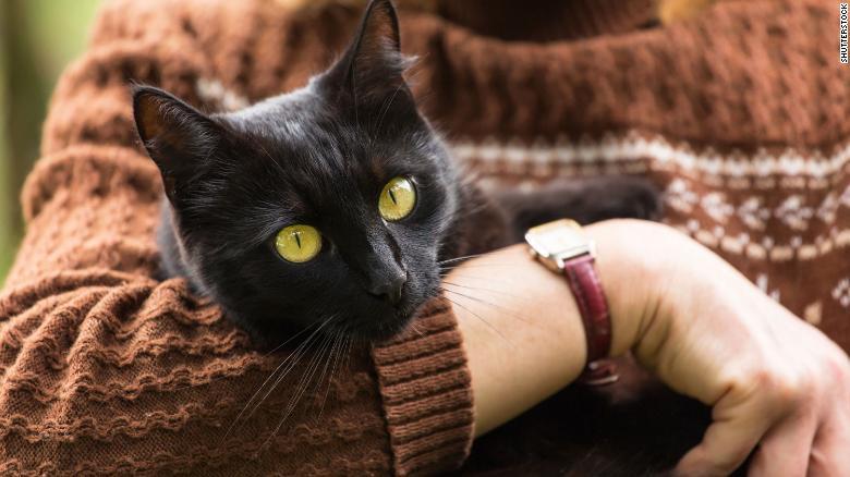 برای کنترل شیوع کروناویروس حیوانات محلی خود را در خانه نگه دارید!