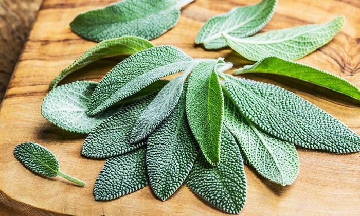 استفاده از ویروس گیاهی برای درمان بیماریهای خودایمن