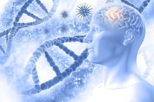 فشار جسمی ناشی از شغل با روند سریع تر پیری مغز و حافظه ضعیف تر مرتبط است
