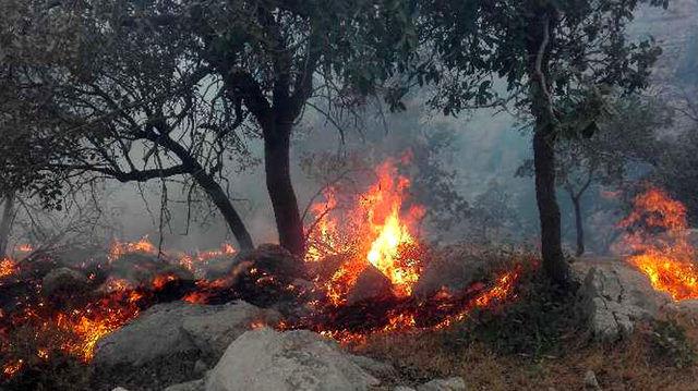 نتایج مطالعه جدید: آلودگی هوا ناشی از آتش سوزی جنگل ها برای بیماران کلیوی مرگبار است