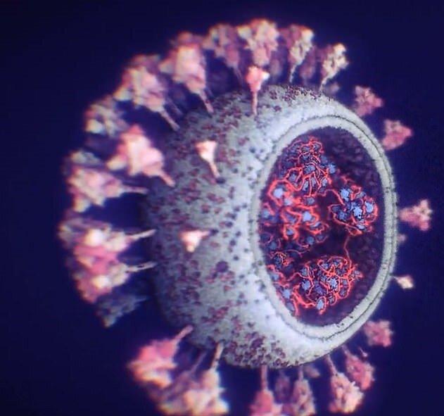 انتشار دقیقترین و بهروزترین تصویر از ویروس کووید-۱۹